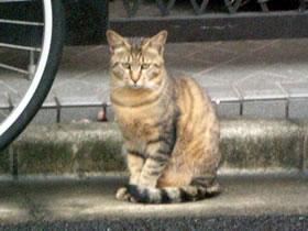 上板橋の猫(ねこ)の写真(画像)