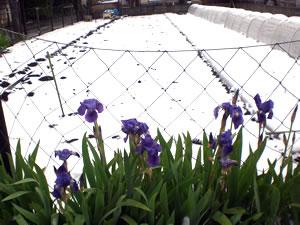 100417雪景色写真