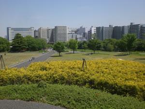 昭和記念公園写真1