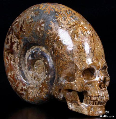 Kotaku_201303_skullis_ammonite