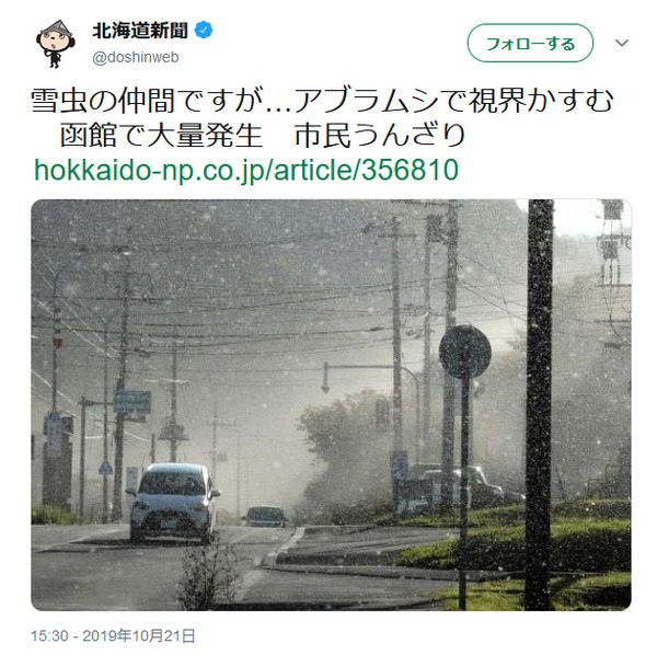 雪虫とは大量発生画像動画生息地対策初雪夜北海道生態ケヤキフシアブラムシ口入る食べる目に入る