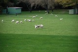 羊牧場02