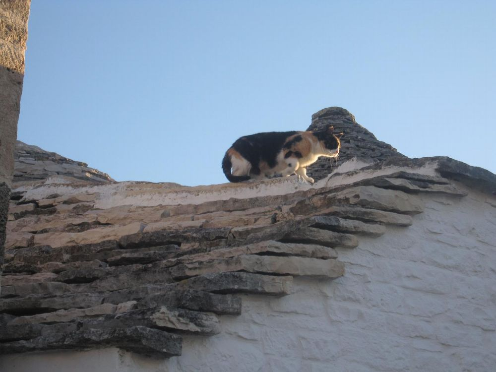 写真3 屋根の猫チャン