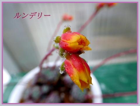 DSCN9820[1]