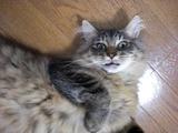 化け猫アップ