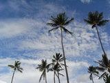 ハワイ景6