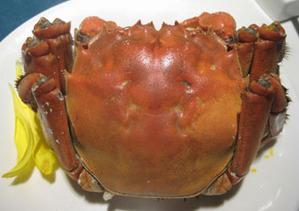 08年12月_流金歳月_上海蟹