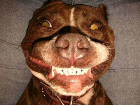 爆笑している動物5