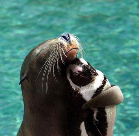 ペンギンとアザラシ