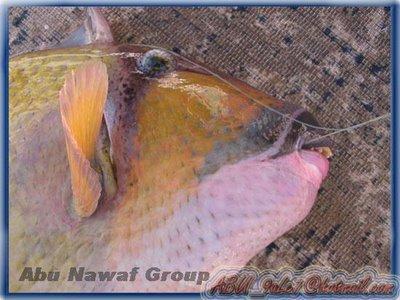 Ikan Mulut Manusia (2)
