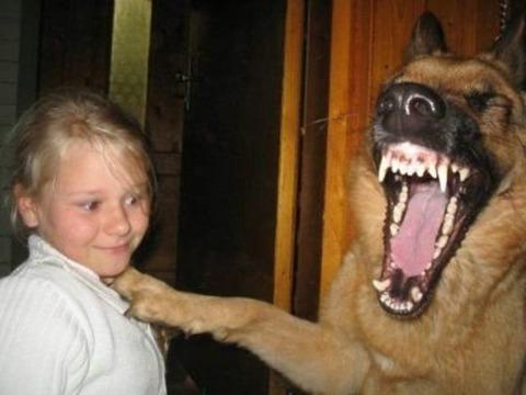 爆笑している動物2