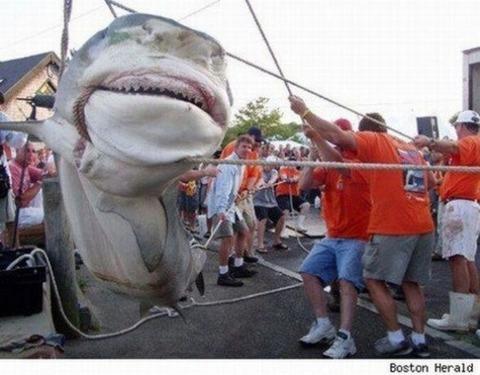 big-fish07[1]