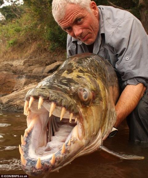 peces-gigantes