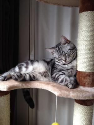ネコのチン太