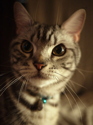 猫のチン太