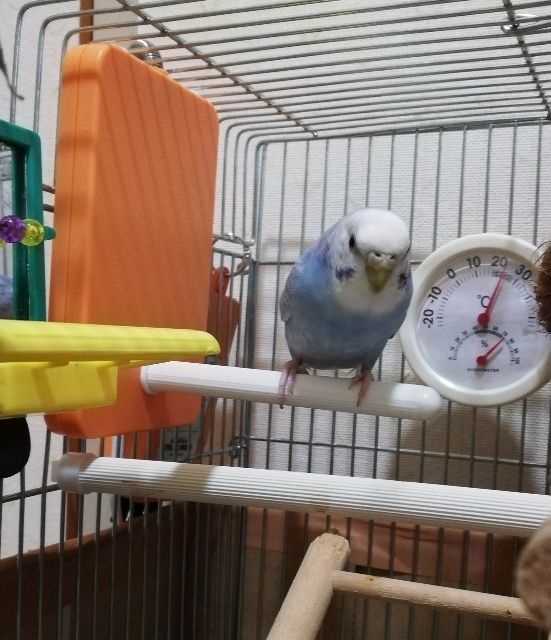 ヒーター 寄り添い 【楽天市場】ほっととり暖 よりそいヒーター/小鳥