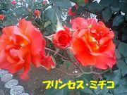 090516_プリンセスミチコF