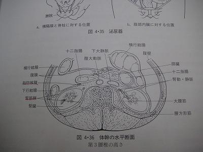 体幹の水平断面