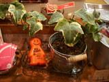 フレンドリーの観葉植物