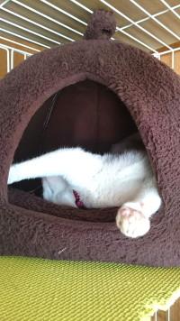ネコ 熟睡