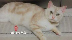 satsuki (2)
