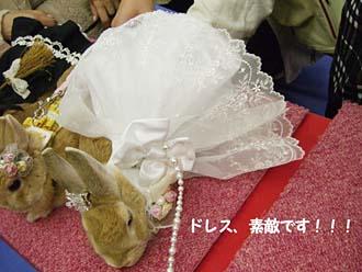 すごいドレス!!!