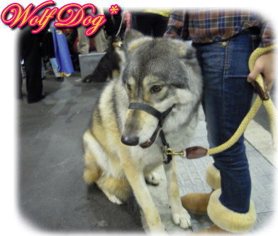 ★狼犬さん★