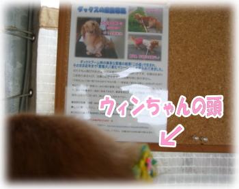d9833d5d.jpg