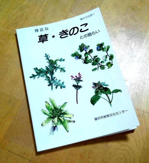 湘南の草_教文