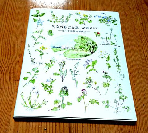 湘南の草2