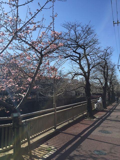 写真 2017-02-03 13 17 26