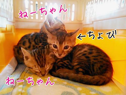 IMG_0113のコピー