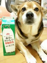 無脂肪乳ダイエット1
