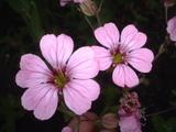 小花(ピンク)