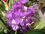 紫(華やか)