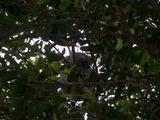 australia zoo2
