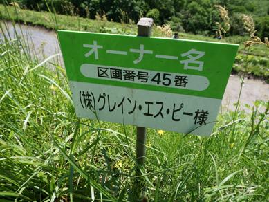 佐渡田植え20180519-8