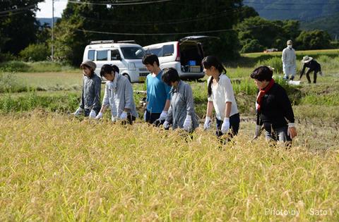 佐渡稲刈り161001-2