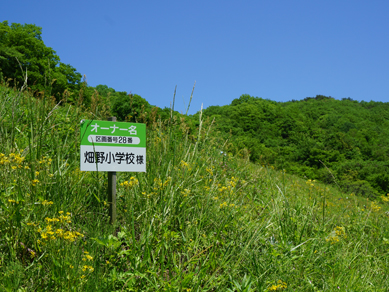 佐渡田植え20180519-9