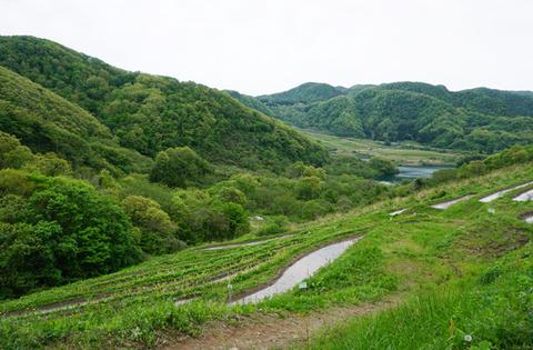佐渡2017_棚田田植え0514-10