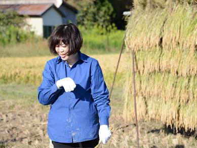 佐渡稲刈り161001-10