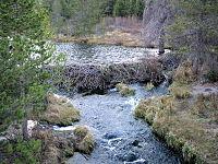 ビーバーのダム