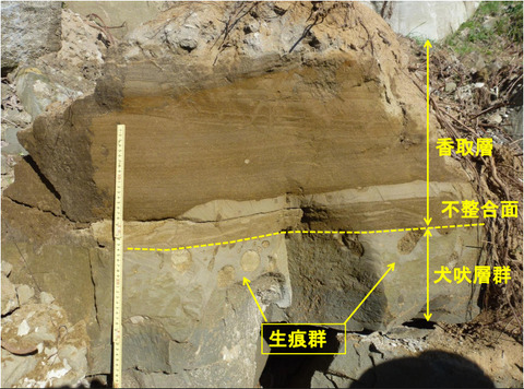 50_屏風ヶ浦の生痕化石2
