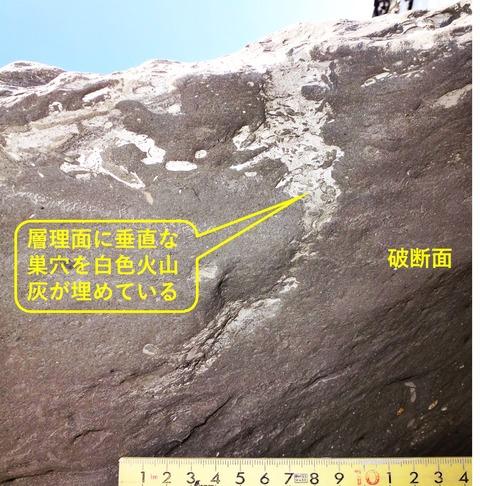 銚子ジオ散歩208図6