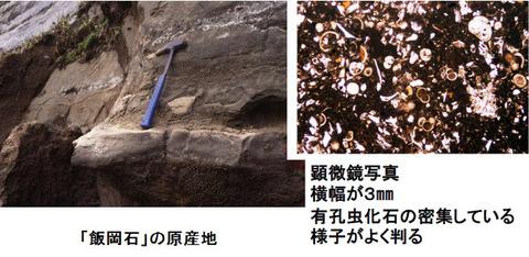 62千葉県立中央博物館HP引用Ed2