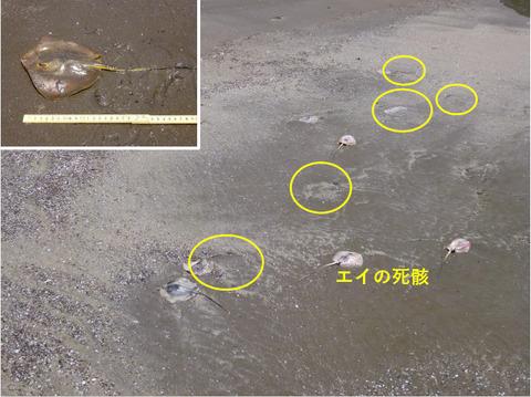 銚子ジオ散歩148図⑪