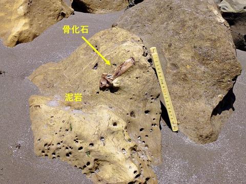 銚子ジオ散歩220図3