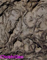 生痕化石fgi007EdChr