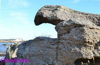 トンビ岩0065Ed2Chr
