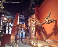 恐竜骨格140117_142505Ed